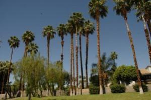 カリフォルニアの青い空とパームツリー